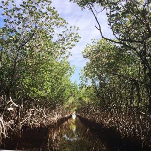 Everglades Mangroven