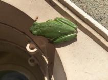 Treefrog2