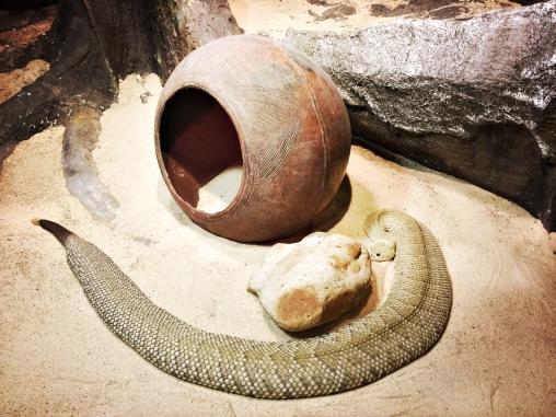 RT17: Wilmington (mex. rattle snake)